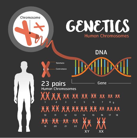 Representação dos 23 pares de cromossomos humanos presentes no DNA analisados em mapeamento genético.