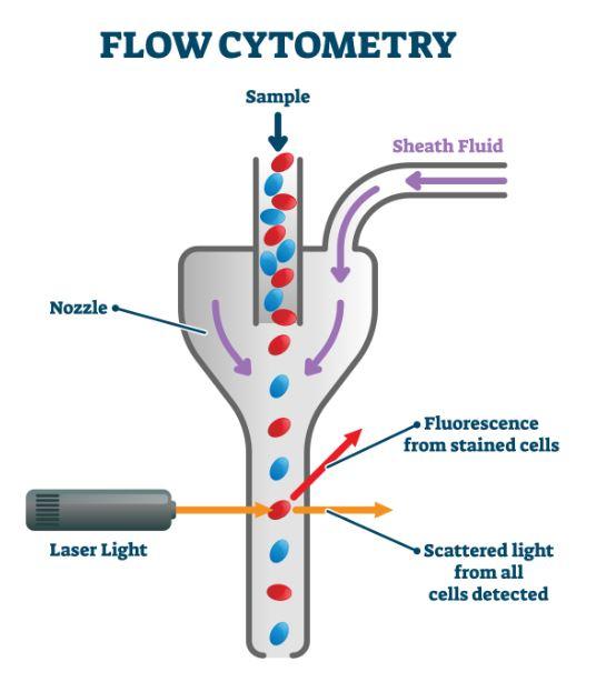 Imunofenotipagem através da citometria de fluxo