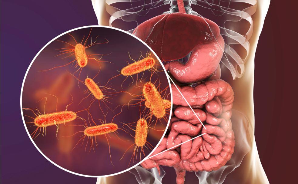 microbioma intestinal bactérias
