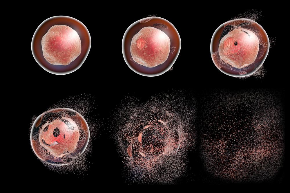 apoptose morte celular